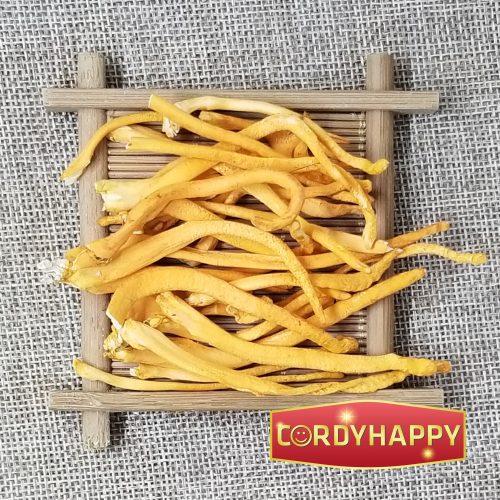 đông trùng hạ thảo khô cordyhappy