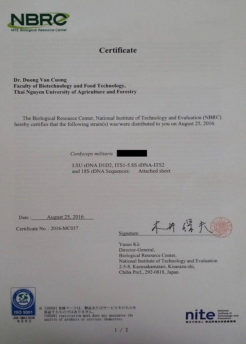 Giống gốc Đông trùng Hạ thảo CordyHappy nhập khẩu từ Nhật Bản