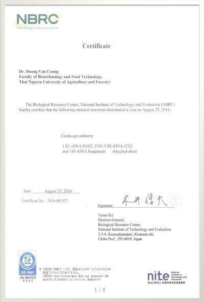 Giống gốc Đông trùng Hạ thảo chất lượng cao được nhập khẩu từ Ngân hàng Giống chuẩn Vi sinh vật NBRC của Nhật Bản.