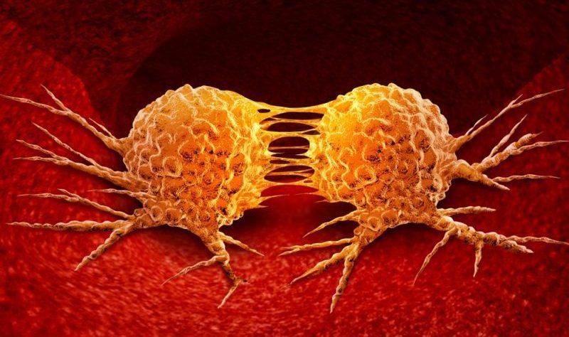 Đông trùng hạ thảo phòng chống di căn ung thư