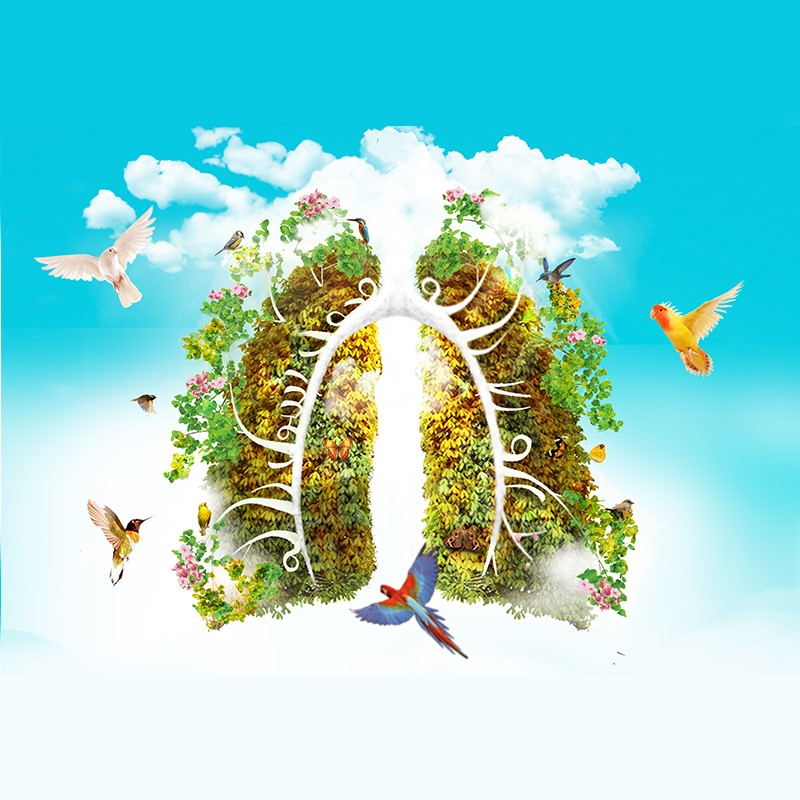 đông trùng hạ thảo tốt cho phổi như thế nào