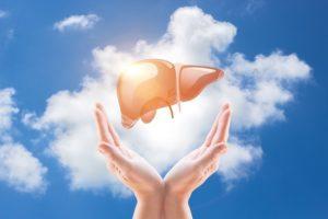 Tác dụng của Đông trùng Hạ thảo với gan