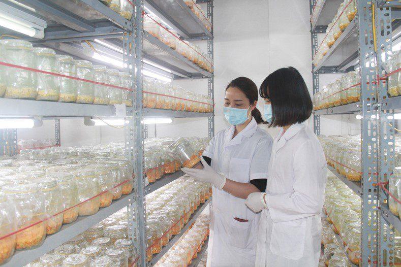 Quá trình nuôi trồng đông trùng hạ thảo được các nhà khoa học, cán bộ Viện Khoa học Sự sống kiểm tra, theo dõi, đánh giá nghiêm ngặt.