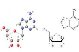 cordycepin vs adenosine